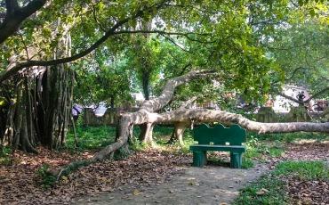 মল্লিকপুরের বটবৃক্ষ ঝিনাইদহ