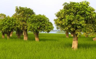 দিল্লীর আখড়া কিশোরগঞ্জ