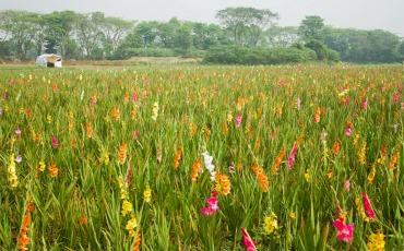 সাবদি নারায়ণগঞ্জ