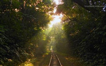 লাউয়াছড়া জাতীয় উদ্যান, শ্রীমঙ্গল