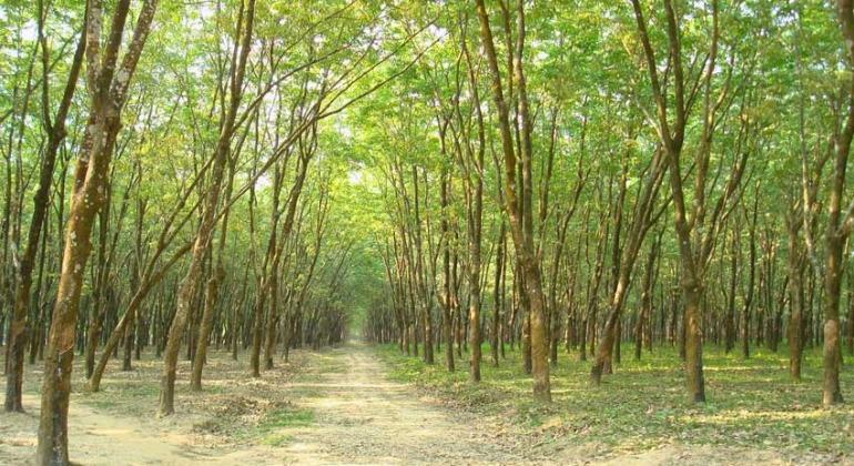 মধুপুর জাতীয় উদ্যান, টাঙ্গাইল