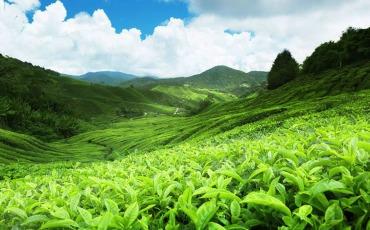 শ্রীলংকা ভ্রমণ : নওয়ারা এলিয়া