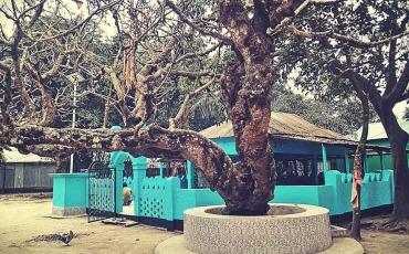 শের আলী গাজীর মাজার শেরপুর